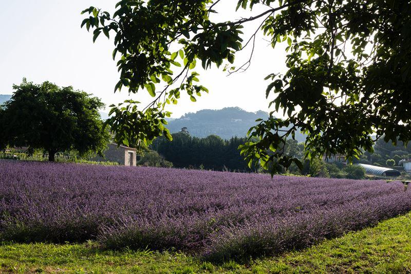 Lancôme приобретает историческое поместье в Грасе на юге Франции в Провансе - фото 4
