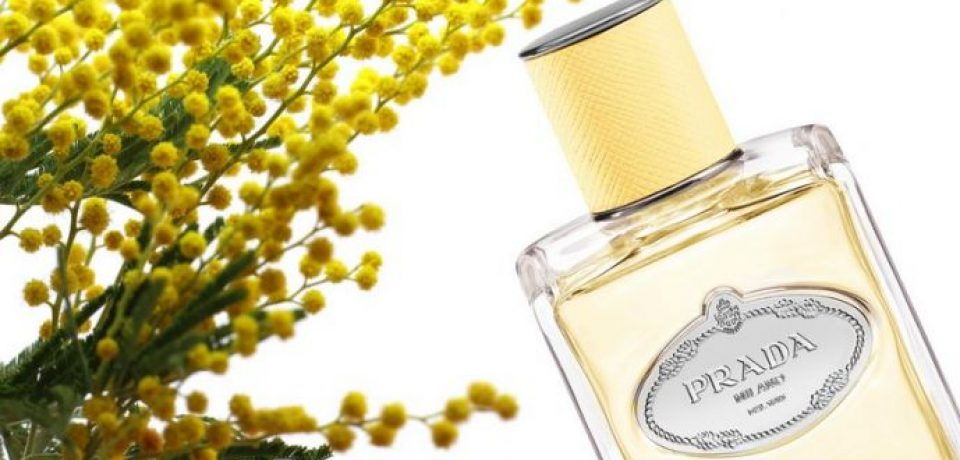 Infusion of Mimosa – новый цветочный аромат Prada