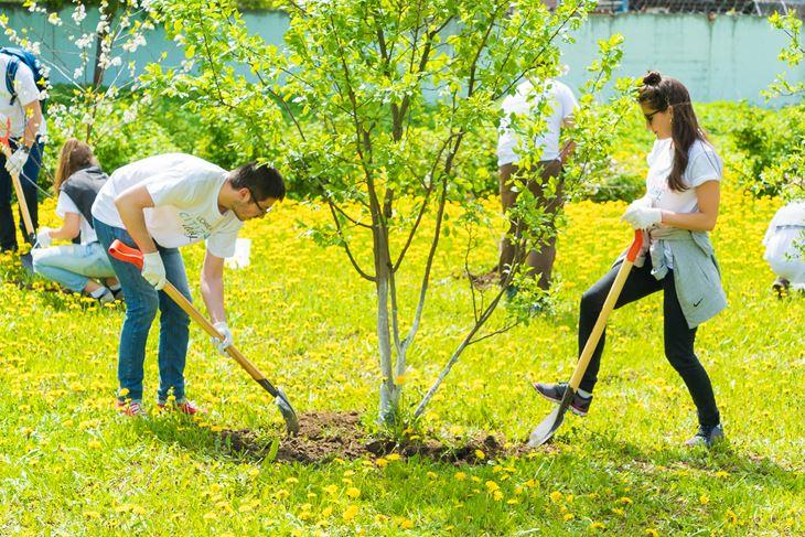 День Социальной Ответственности L'Oréal - посадка деревьев