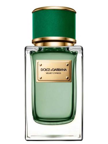 Новые ароматы Dolce&Gabbana: Velvet Cypress - чистый кипарисовый с цитрусами